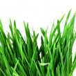 Green grass of oats  — Stock Photo #36997373