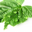 Leaf and drops of water — Stock Photo #36997425