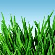Spring grass and sky — Stock Photo