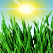 Spring grass and sky — Stock Photo #36997469
