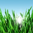 Spring grass and sky — Stock Photo #36997475