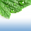 Leaf and drops of water — Stock Photo #36997495