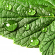 Leaf and drops of water — Stock Photo #36997503