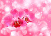 Rosa illustrationen med orkidé blommor — Stockfoto