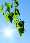 Spring. Green leaves and sky — Stockfoto