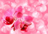 Pink illustration with orchid flowers — Stock Photo