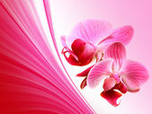 Pink illustration with orchid flowers — Photo