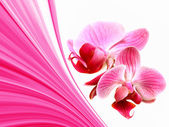 Pink illustration with orchid flowers — Stock fotografie