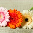 Fine flowers gerberas — Stock Photo