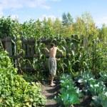 Summer resident in garden — Stock Photo #37331013