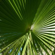 Palm tree close-up — Stock Photo