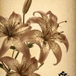 Flowers lily on old paper — Stock Photo