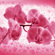 Stock Photo: Flower pink orchid in Valentines frame