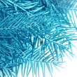Fir tree close-up — Stock Photo