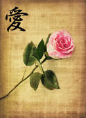 Pink rose on old paper — Stock Photo