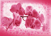 Flower pink orchid in Valentines frame — Stock Photo