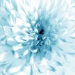 Stock Photo: White - blue flower closeup