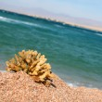 Egypt . Beach in Charm ale Sheikh — Stock Photo
