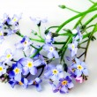 Flowers forget-me-not — Stock Photo #37758645