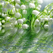 Stock Photo: Lily of valley in water