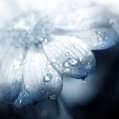 Krásný gerbera květ — Stock fotografie