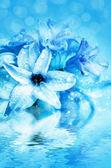 Beautiful flower hyacinth — Foto Stock