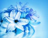 Beautiful flower hyacinth — Stockfoto