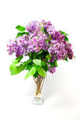 Spring flowers lilac — Stock Photo
