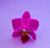 Krásná květina orchidej — Stock fotografie