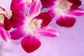 Piękny kwiat orchidei — Zdjęcie stockowe