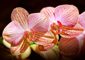 Schöne blume orchidee — Stockfoto