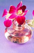 Orchidée de la belle fleur — Photo
