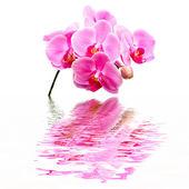Orquídea flor hermosa — Foto de Stock