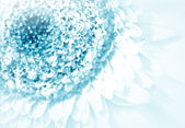 Flower gerbera — Stock Photo