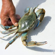 Blue crab in male hands — Stock Photo