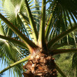 Palm — Stock Photo #38617007