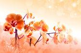 美しい花の蘭 — ストック写真
