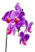 Beautiful flower Orchid — Stock Photo