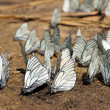 Stock Photo: Butterflies on ground