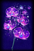 Magical purple orchid — Stock Photo