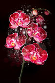 Magical orchid — Stock Photo