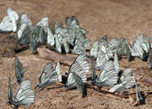 Butterflies on the ground — Stock Photo
