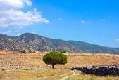 Ruins of Hierapolis — Stock Photo