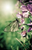 Butterfly on a flowers of plant — Stock Photo