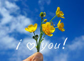 Wild buttercups with Love you sign — Stock Photo