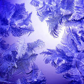 Frosty winter lilac pattern — Stock Photo