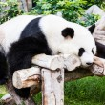 熊猫人 — 图库照片