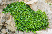 Plant growing in stone floor — Stock Photo