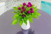 Globe amaranth in a vase — Stock Photo