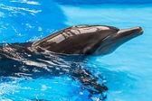 Delfín. — Stock fotografie